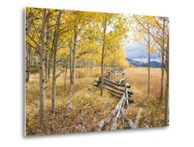 Wooden fence and Aspen forest in autumn-Frank Lukasseck-Metal Print