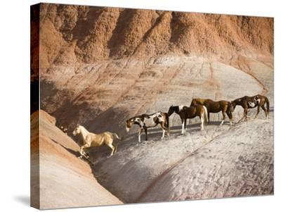 Herd of horses in foothills-Frank Lukasseck-Stretched Canvas Print