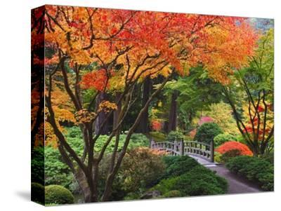Fall colors at Portland Japanese Gardens, Portland Oregon-Craig Tuttle-Stretched Canvas Print