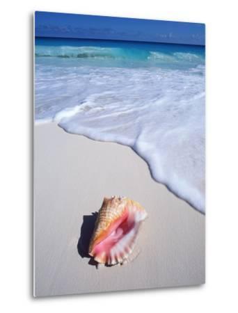 Mexico, Yucatan Peninsula, Carribean Beach at Cancun, Conch Shell on Sand-Chris Cheadle-Metal Print