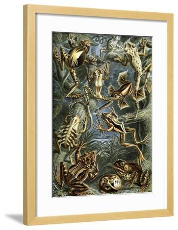 Illustration of Batrachia by Ernst Haeckel--Framed Giclee Print