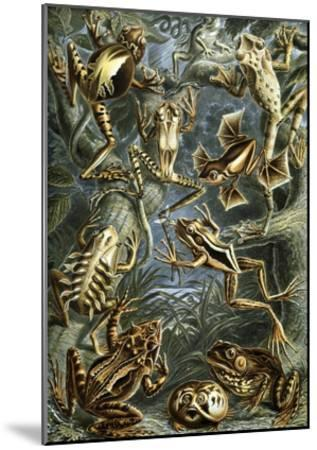 Illustration of Batrachia by Ernst Haeckel--Mounted Giclee Print