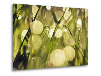 Leaves of grass with dew drops-Frank Krahmer-Metal Print