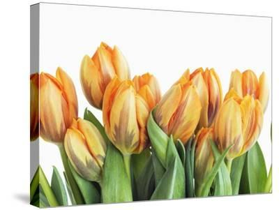 Tulips-Frank Krahmer-Stretched Canvas Print