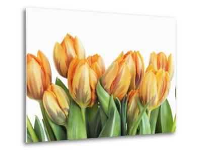 Tulips-Frank Krahmer-Metal Print
