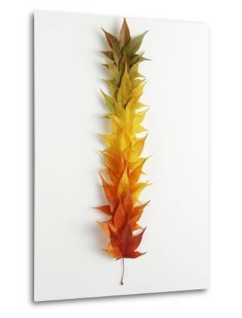 Autumn Foliage--Metal Print
