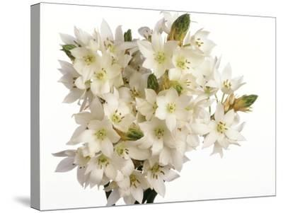 Bouquet of white flowers--Stretched Canvas Print