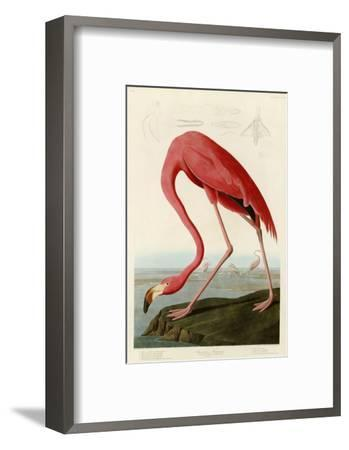 American Flamingo John James Audubon Framed Giclee Print