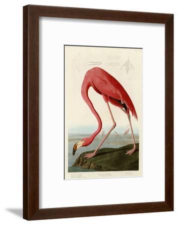 American Flamingo-John James Audubon-Framed Giclee Print