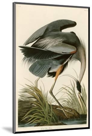 Great Blue Heron-John James Audubon-Mounted Premium Giclee Print