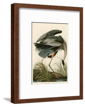 Great Blue Heron-John James Audubon-Framed Premium Giclee Print