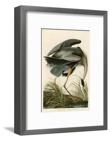 Great Blue Heron-John James Audubon-Framed Giclee Print