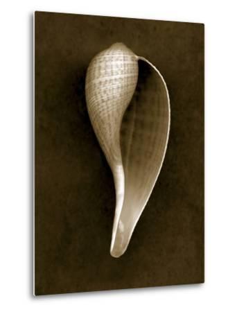 Graceful Fig Shell 2-John Kuss-Metal Print