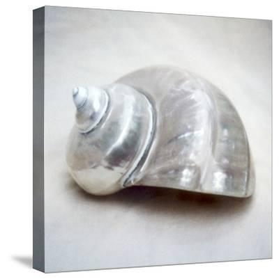 Pearl Turban Shell-John Kuss-Stretched Canvas Print