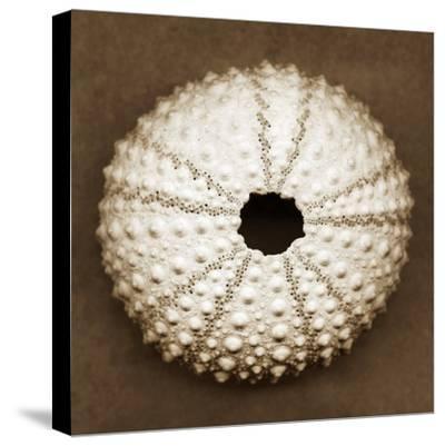 Pink Sea Urchin-John Kuss-Stretched Canvas Print