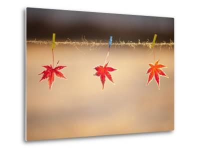 Fallen leaves hanging the rope-JongBeom Kim-Metal Print