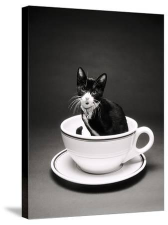 Kitten in a Teacup-Robert Essel-Stretched Canvas Print