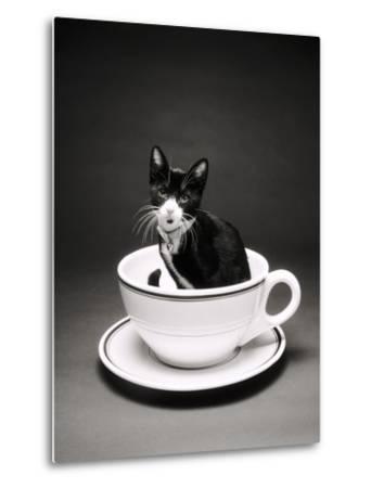 Kitten in a Teacup-Robert Essel-Metal Print
