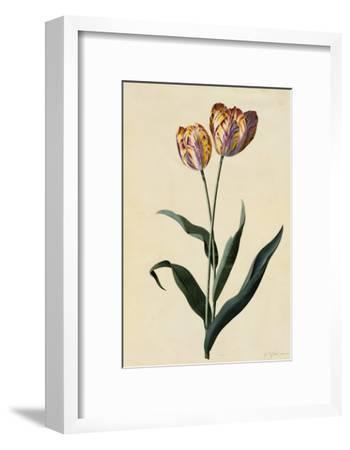 Botanical Print of Tulip-Johann Wilhelm Weinmann-Framed Giclee Print
