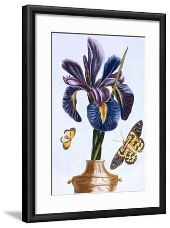 18th Century French Print of Common Iris With Butterflies-Stapleton Collection-Framed Giclee Print
