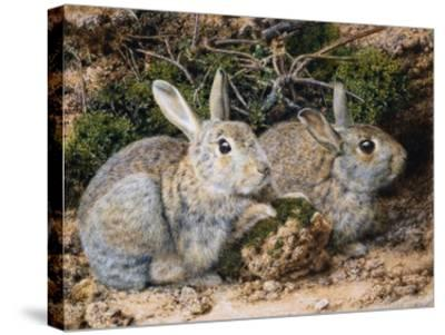 Two Rabbits-John Sherrin-Stretched Canvas Print