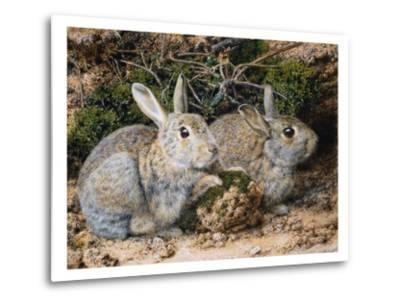 Two Rabbits-John Sherrin-Metal Print