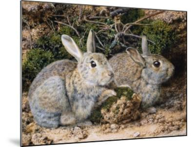 Two Rabbits-John Sherrin-Mounted Giclee Print
