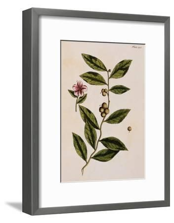 Green Tea-Elizabeth Blackwell-Framed Giclee Print