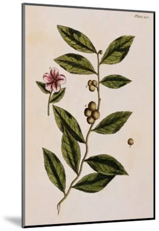 Green Tea-Elizabeth Blackwell-Mounted Giclee Print