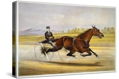 Queen of the Turf, 'Maud S', Driven by W.W. Bair, Lithograph-Nicholas Winfield Leighton-Stretched Canvas Print