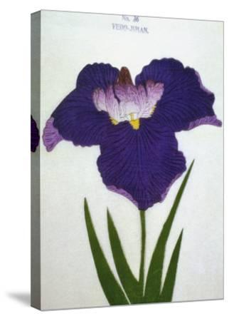 Yedo-Jiman Book of a Purple Iris-Stapleton Collection-Stretched Canvas Print