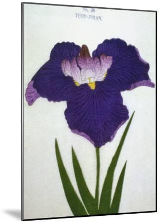 Yedo-Jiman Book of a Purple Iris-Stapleton Collection-Mounted Giclee Print