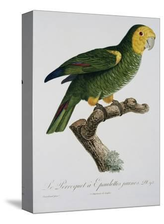 Yellow-Shouldered Parrot-Jacques Barraband-Stretched Canvas Print