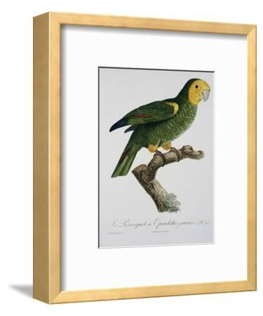 Yellow-Shouldered Parrot-Jacques Barraband-Framed Premium Giclee Print