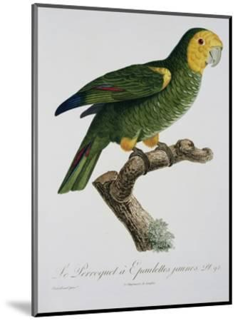 Yellow-Shouldered Parrot-Jacques Barraband-Mounted Premium Giclee Print