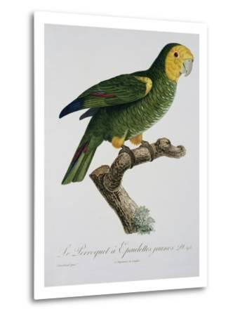 Yellow-Shouldered Parrot-Jacques Barraband-Metal Print