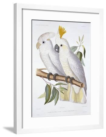 Print of Two Cockatoos by A. Dumenil-Stapleton Collection-Framed Giclee Print