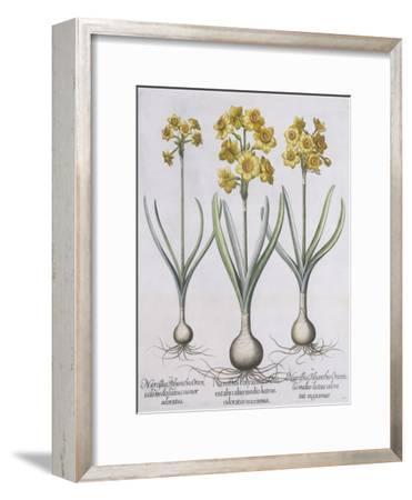 Narcissis Polyanthus-Basilius Besler-Framed Giclee Print