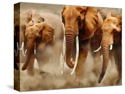 African Elephants-Martin Harvey-Stretched Canvas Print