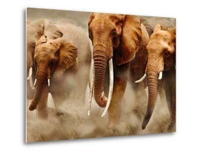 African Elephants-Martin Harvey-Metal Print