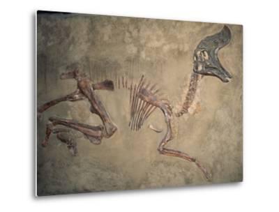 Cretaceous Lambeosaurus Dinosaur Fossil-Kevin Schafer-Metal Print
