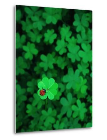 Ladybug on Four Leaf Clover-Bruce Burkhardt-Metal Print