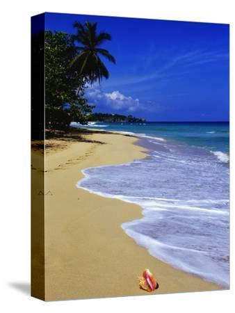Conch Shell on Playa Grande Beach-Danny Lehman-Stretched Canvas Print