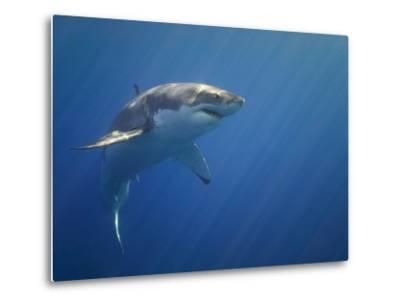 Shark in Open Water-Tim Davis-Metal Print