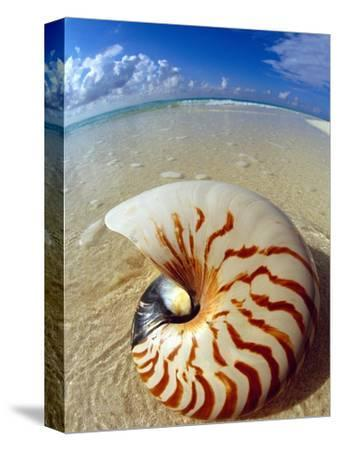 Seashell Sitting in Shallow Water-Leslie Richard Jacobs-Stretched Canvas Print