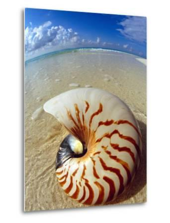Seashell Sitting in Shallow Water-Leslie Richard Jacobs-Metal Print