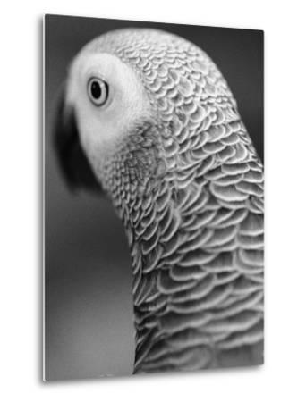 Back of Parrot's Head-Henry Horenstein-Metal Print