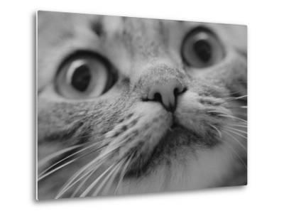 Close Up of Cat's Face-Henry Horenstein-Metal Print