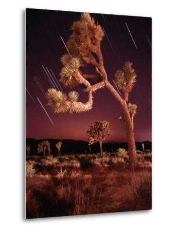Meteor Trails and Joshua Trees-Richard Cummins-Metal Print