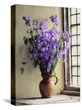 Canterbury Bells-Clay Perry-Stretched Canvas Print